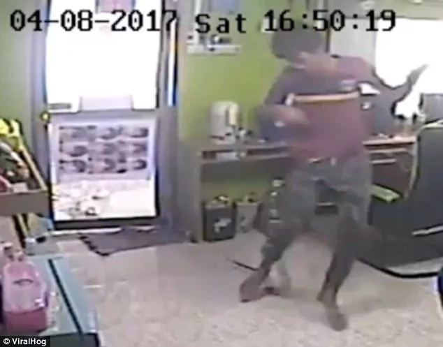 Snake flies into café bites man's behind as customers run away for help