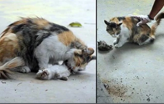 Desesperada gata trata de revivir a sus gaticos y esto le rompe el corazón a cualquiera