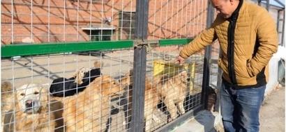 En honor de su amado perro perdido, este millonario decidió rescatar más de 2000 perros de refugio