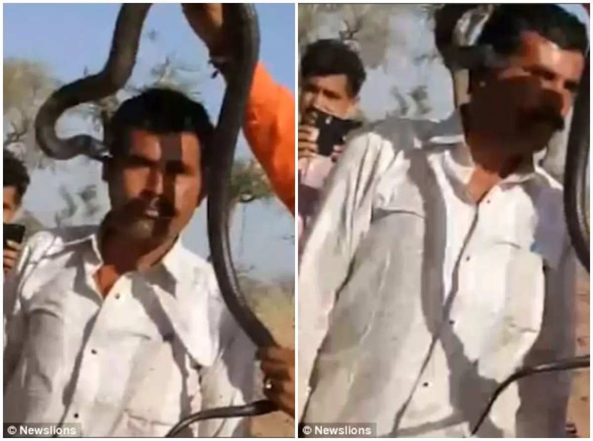"Man BITTEN on the face by cobra while posing for a photo with it, dies ""within an hour"" (photos, video)"