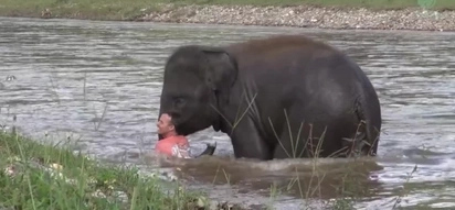 Incredible Video Shows Baby Elephant Saving A Man From Death!