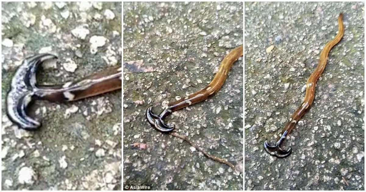 Scary snake-like creature that swallows his prey when there's no food