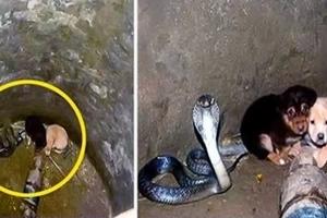 ¡Increíble! Cachorritos caen en un pozo lleno de cobras... ¡No creerás lo que pasó!
