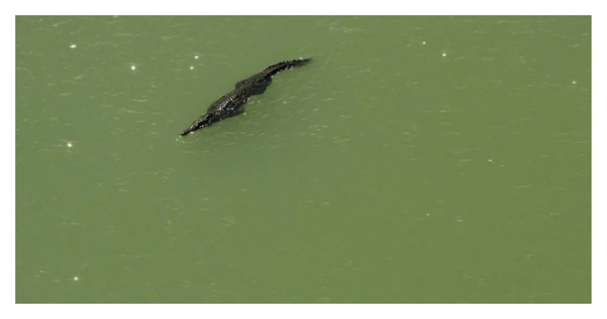 Family watches in PANIC as crocodile attacks an Indian girl having a bath near a river (video)
