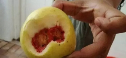 HIV infested apple? Apple filled with blood sent for lab testing after people claimed it had HIV