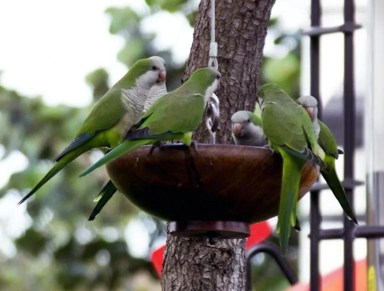Imagen tomada de BirdsFeeders