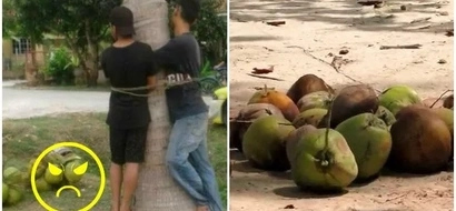 See how two stupid coconut thieves were punished recently (photos)