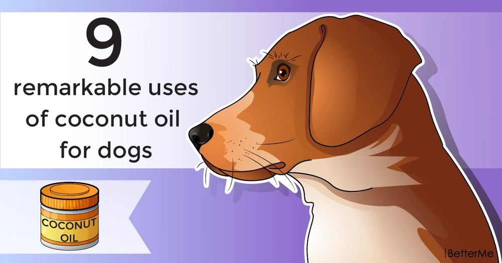 9 remarkable uses of coconut oil for dogs