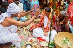 WATCH: Girl has arranged marriage to dispel curse; you'll never guess who she married!