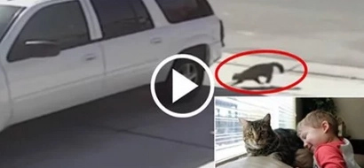 Gato salva a un niño del brutal ataque de un perro