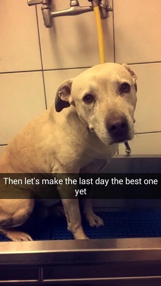 Registró el último día de vida de su perro, ¡esto te hará llorar!