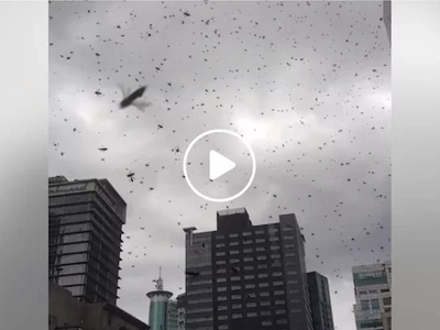 Bees in the city! Netizen captures creepy video of swarm of bees flying around