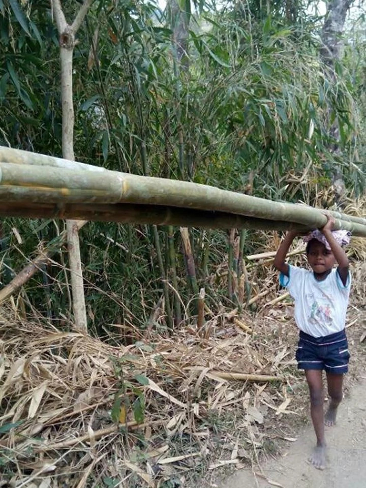 Child endures carrying bamboos to feed her family