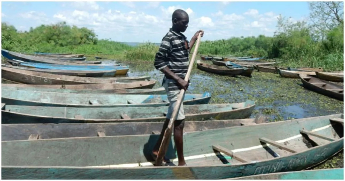 Awful! Over 1,000 children drop out of school to take up fishing due to hunger