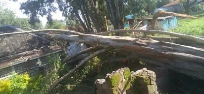 Fallen tree forces elders to perform ritual in Nakuru