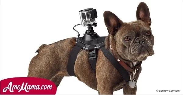 Hombre cruel ató una cámara a un perro y lo dejó a la buena del destino