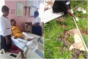Monkey that BIT Muran'ga nurse gets ULTIMATE punishment