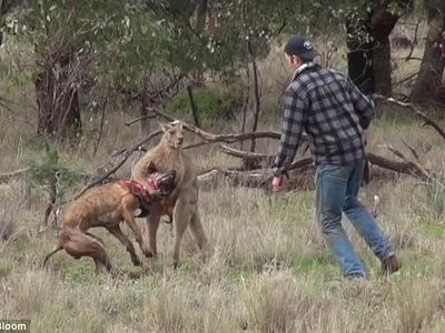 Man Vs Roo Vs Dog - But Who Wins? (Video)