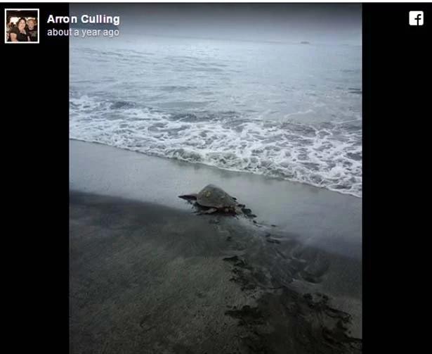 Este hombre compró tortugas en una tienda de alimentos y los llevó directo al océano