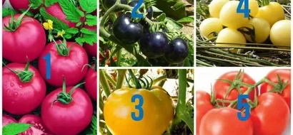 Pick a tomato on this photo. It can reveal the truth about who you are