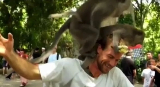 Shameless monkey's have sex right on top of this guy's head!