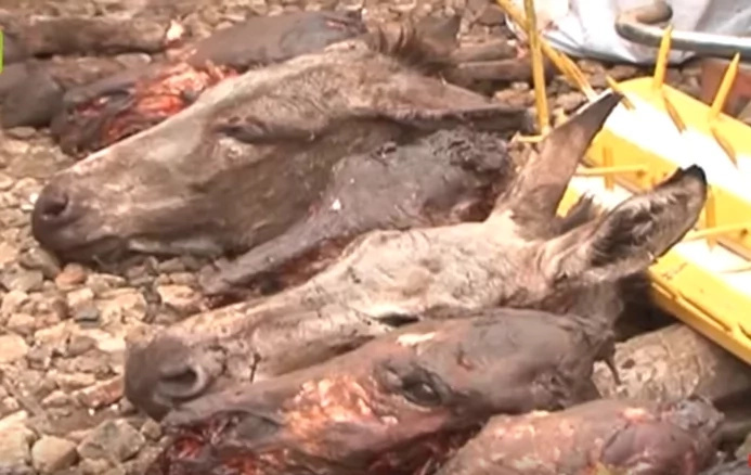 Kiambu men arrested after slaughtering eight donkeys for sale