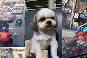 Netizen asks for help to have her sick dog back after CCTV shows a rider who took it away