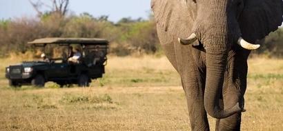 Kenyan Tourism Hit Hard By Insecurity