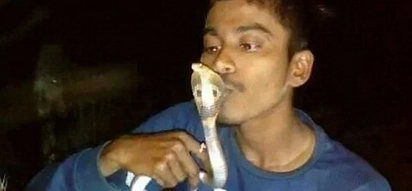 Teen who rescued more than 100 snakes dies after attempting to kiss a live cobra for photo stunt