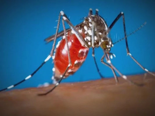 Woman from Iloilo tested positive for Zika virus