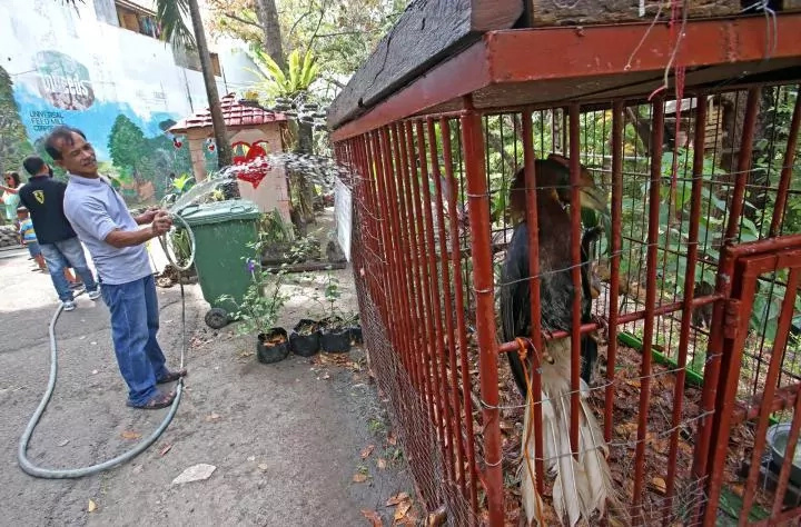 Abandoned Cebu Zoo full of hungry animals
