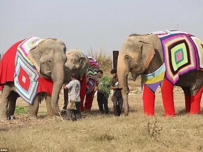 Faith in humanity restored! Outsize sweaters and shoes knitted by villagers to keep elephants warm (photos)
