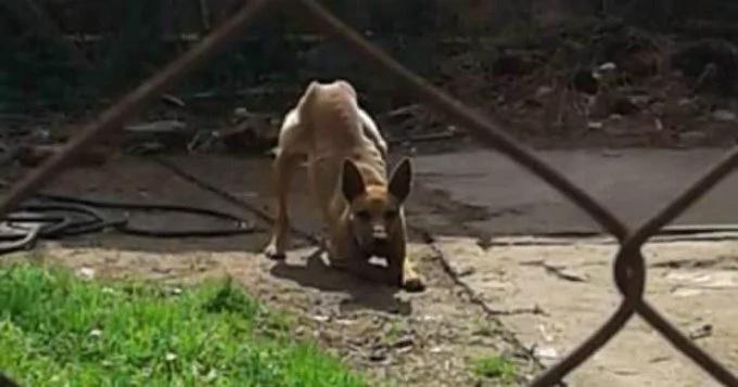 Mujer denunció que su vecino deja morir de hambre a su perro