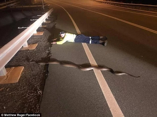 Man takes picture with huge 2.5-metre python after saving it as it crossed a road