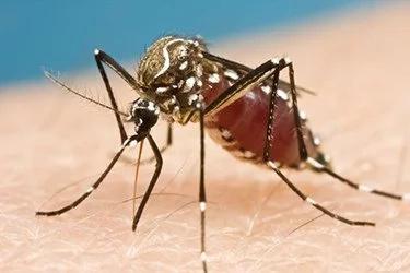 Complicaciones para bebés con microcefalia debido al zika