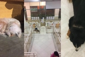 Enraged netizen shares shocking situation of animals who are not properly treated in a dog and cat cafe