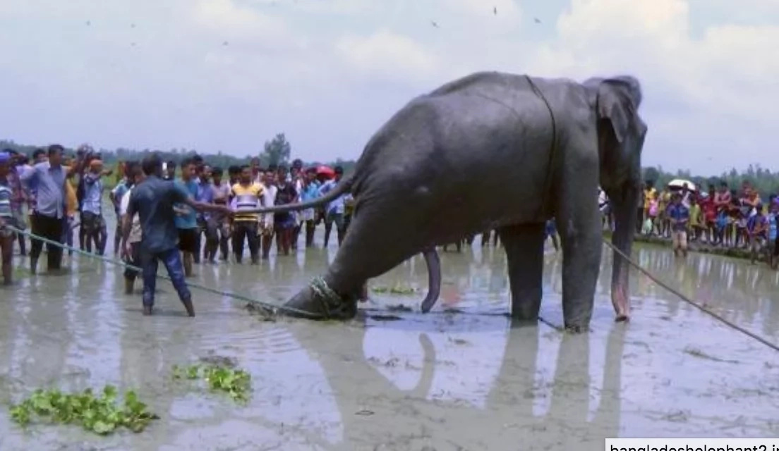 Elephant dies on its way back home