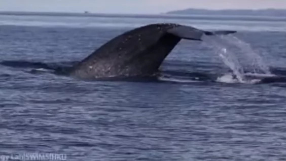 WATCH: Blue whale sighted along Dumaguete coast