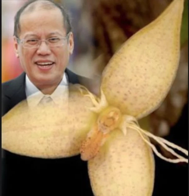 Rare orchid gets PNoy's name
