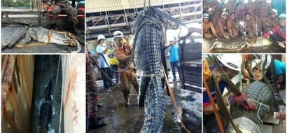 Kind firefighters rescue MASSIVE 6-metre crocodile from drain in 10-hour operation (photos, video)