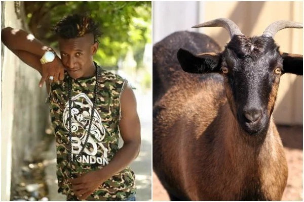 Popular singer at large after stealing neighbour's goat (photos)