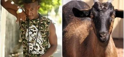 Fast rising Kenyan singer on the RUN after stealing neighbour's goat