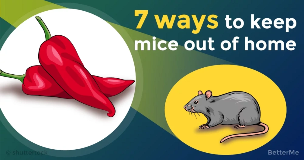 7 ways that can help you keep mice out of home
