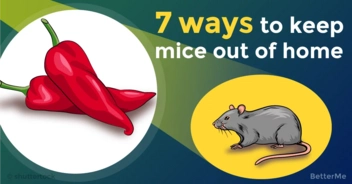 These 7 ways can help you keep mice out of home