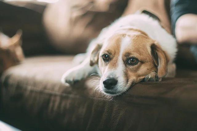 Holanda no tiene perros callejeros