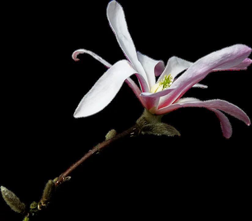 Credit: Pixabay