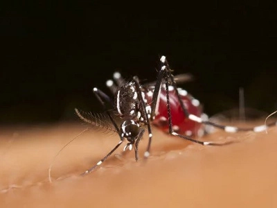 WATCH OUT! Dengue outbreak in Eastern Visayas alarms health officials