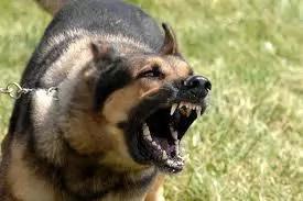 Uasin Gishu rapists run after dog rescues granny