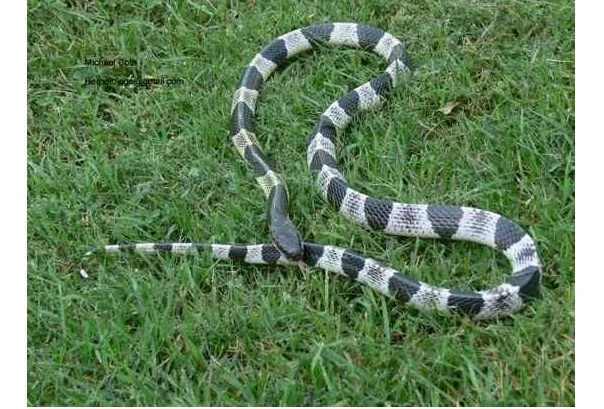 10 Most Poisonous & Dangerous Snakes In The World