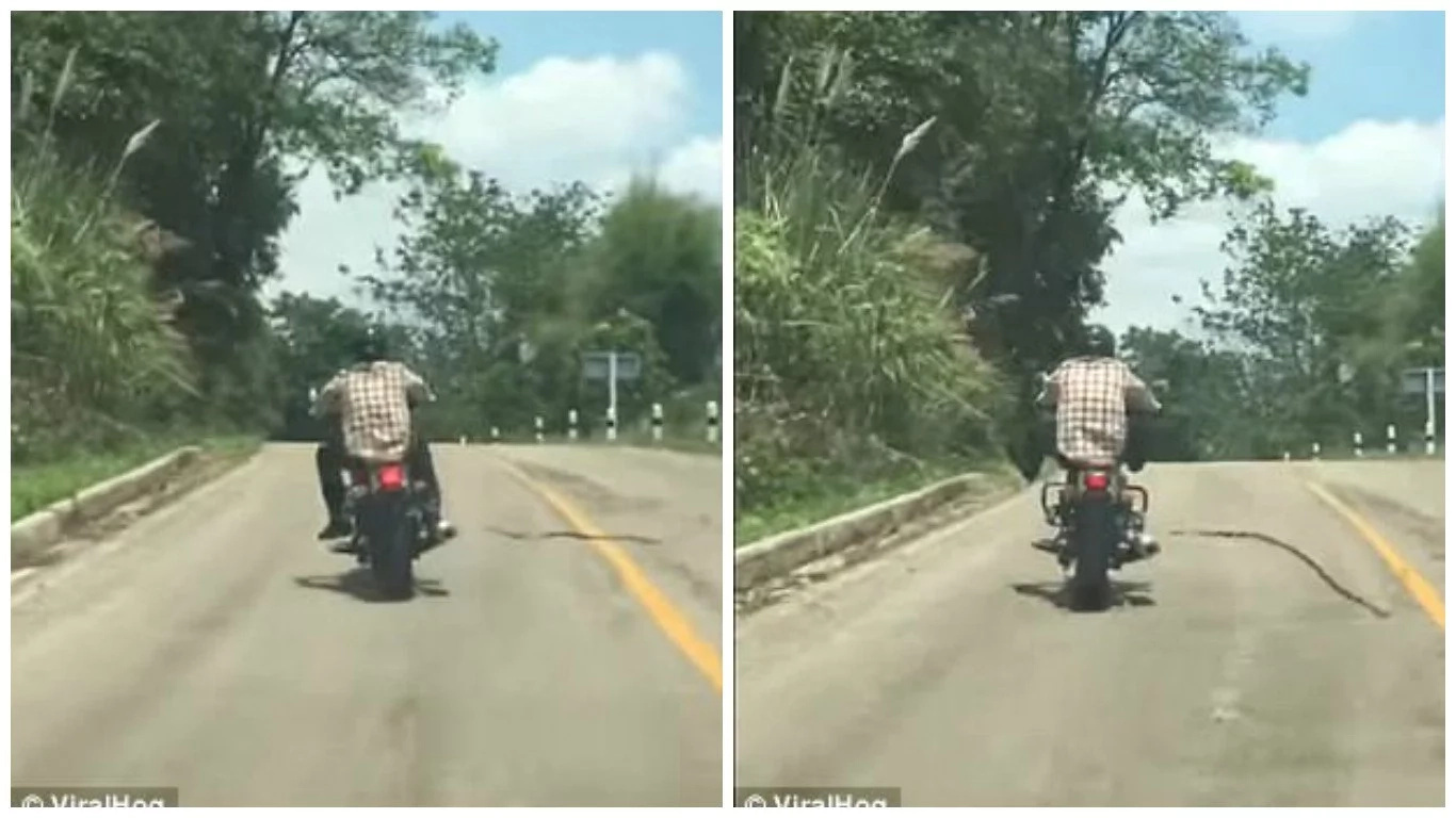 Oh, no! Man attacked by FLYING serpent while enjoying his motorbike ride (photo, video)